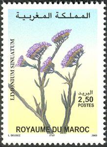 Flores du Maroc Limonium-sinuatum